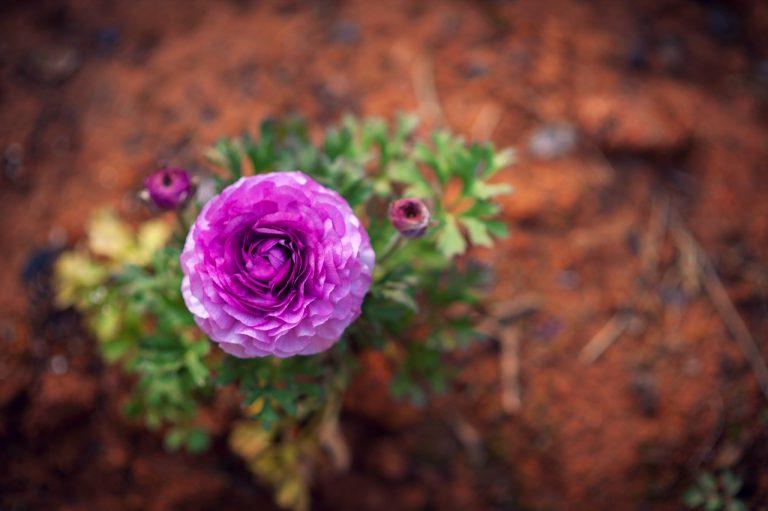 Read more about the article 4 gode tips til indretning af den lille have